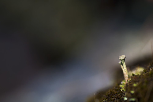 Micro shrooms | by - David Olsson -