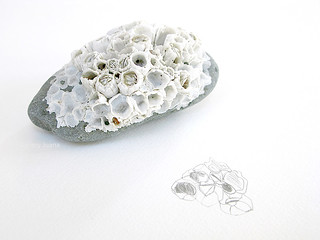 sea rock, barnacles and sketch | by Gallery Juana, Juana Almaguer