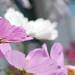 Quelques fleurs,,,