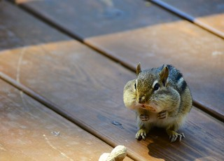 Peanuts?  What Peanuts? I didn't see no stinking peanuts. | by Jamie McCaffrey