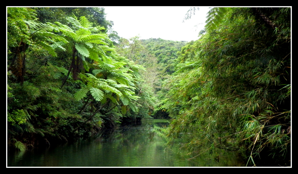 A Deep Jungle River That Extends Without Rapids Rocks Or