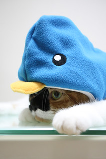 Cat? Penguin? | by ryoichi360