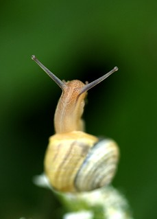 behind the snail | by Viv Buckley Little bib