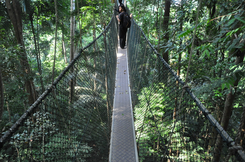 ... Views from the Canopy Walk Taman Negara National Park Malaysia | by travelfishery & Views from the Canopy Walk Taman Negara National Park Mau2026 | Flickr