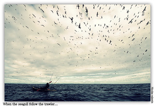 When the seagulls follow the trawler | by Nicolas Valentin