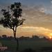 Alam menyambut pagi