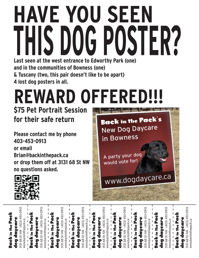 lost dog poster poster