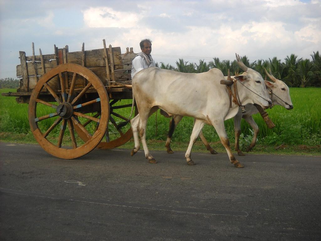 A Journey by Bullock Cart – Essay