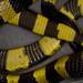 Banded Krait [Bungarus fasciatus] 金環蛇