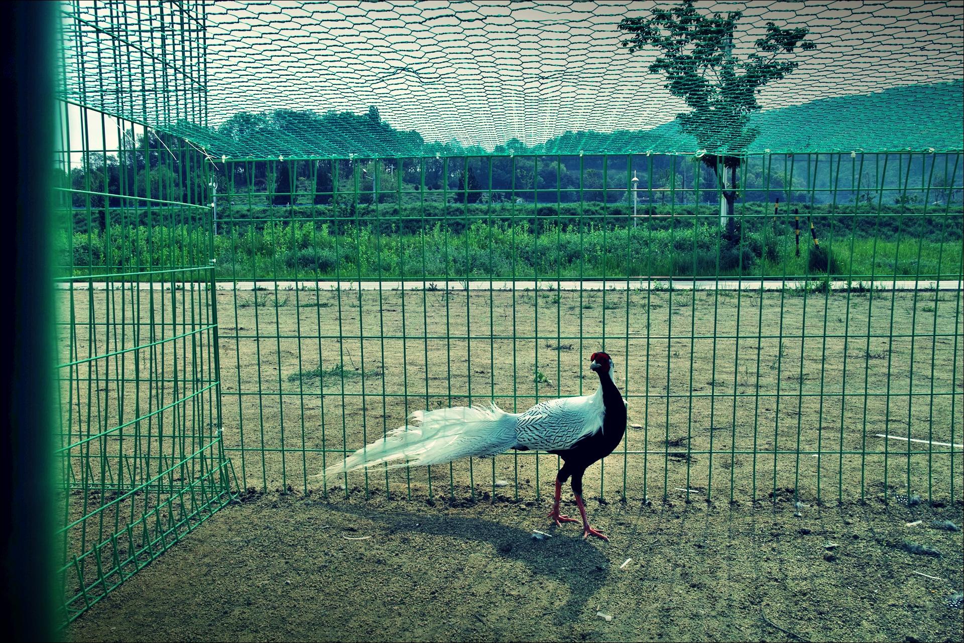닭-'낙동강 자전거 종주여행'