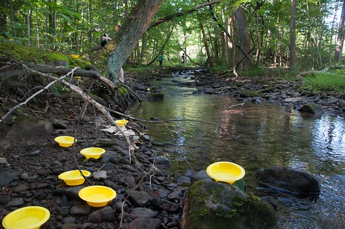 plastic bowls along a creek. Each bowl is filled with slightly soapy water
