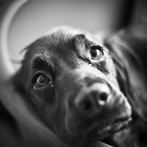 Doggie 1 | by Yates (Way Ahead Photography)