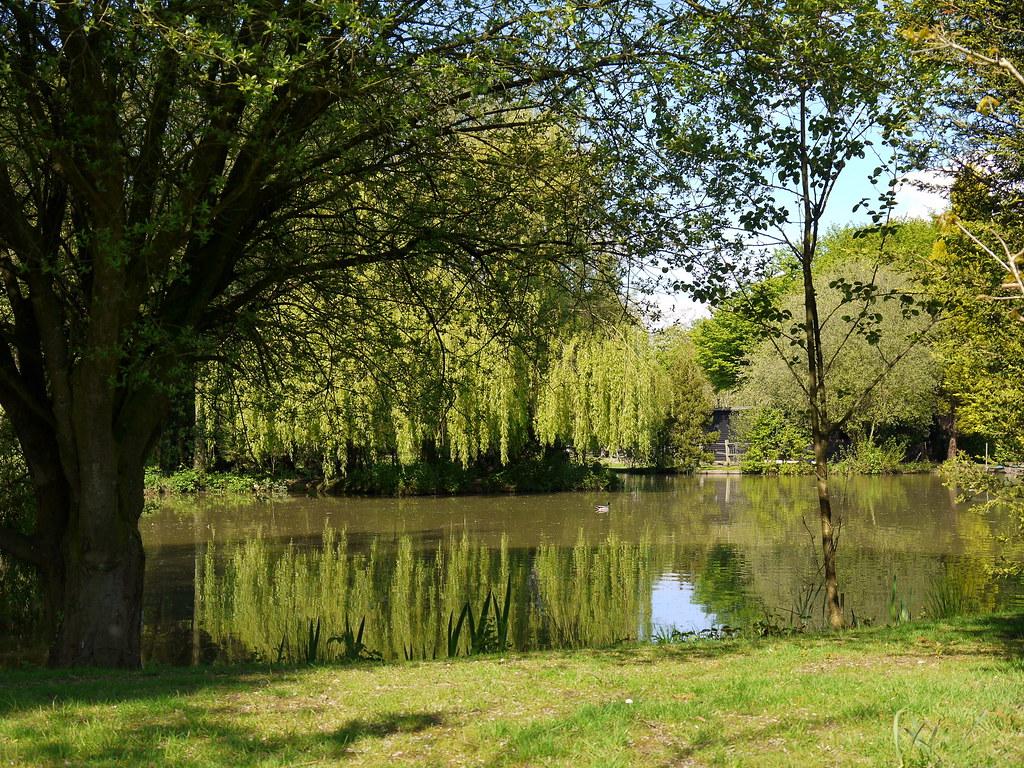 Murky Pond Good Job The Lush Green Foliage Is All Coming