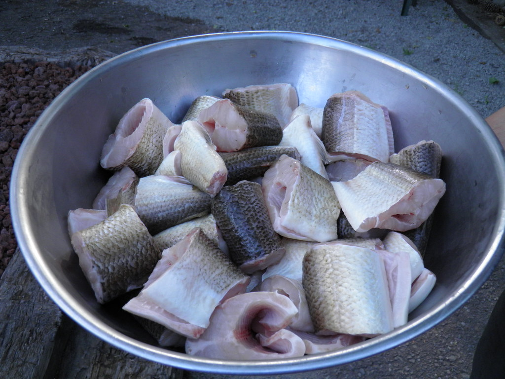 Wisconsin fish boil 5 chunks of whitefish ready to be add for Wisconsin fish boil