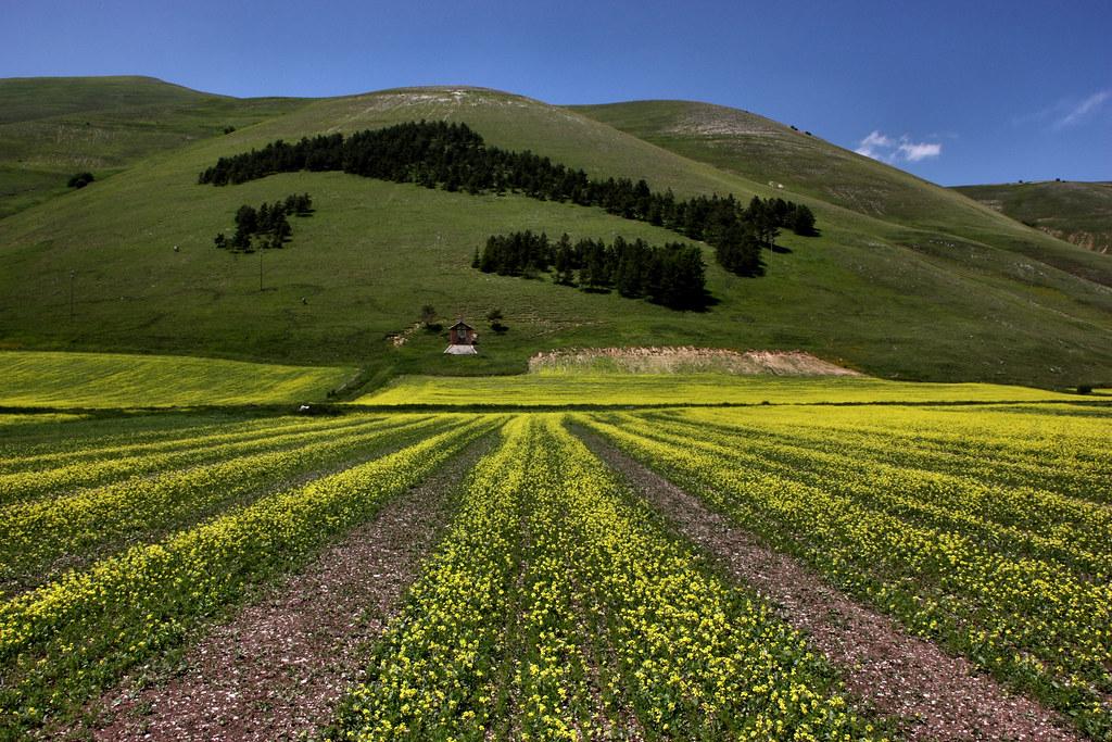 La foresta d italia sulla collina di castelluccio flickr for Piani di serra in collina