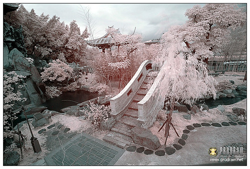 Infrared Photography June 19, 2012 | by ProDraw