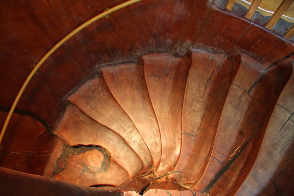 The Stairs Inside The Kauri