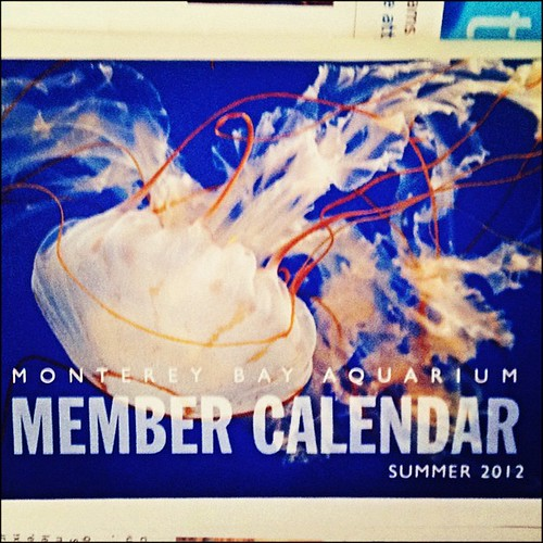 04.29.12: Cool News! Monterey Bay Aquarium is using one of my photos on the cover of their Summer 2012 Member Calendar. | by PJ Taylor Photo