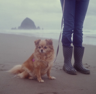 Boots, Beaches and Chihuahuas | by Benjamin Postlewait