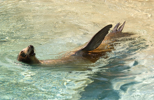 A sea lion basking in the sun