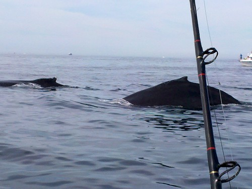 Scituate Whale Watch, Credit: Mclaughlin | by Massachusetts Office of Travel & Tourism