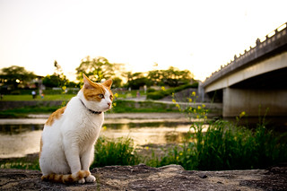 lives by Kamogawa #39 (Kyoto) | by Marser