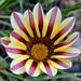 Çiçek-Flower
