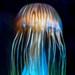 la méduse étranger