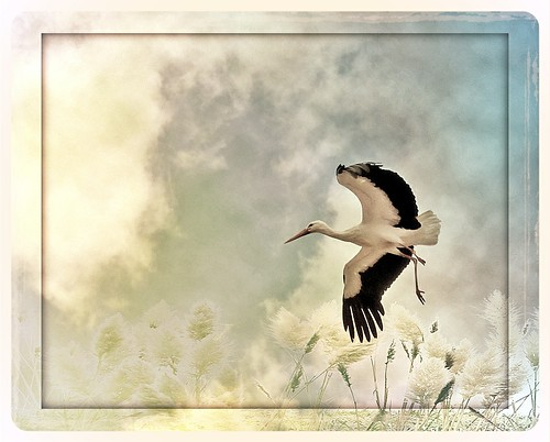 trying to fly again | by ♥Adriënne -for a better and peaceful world-
