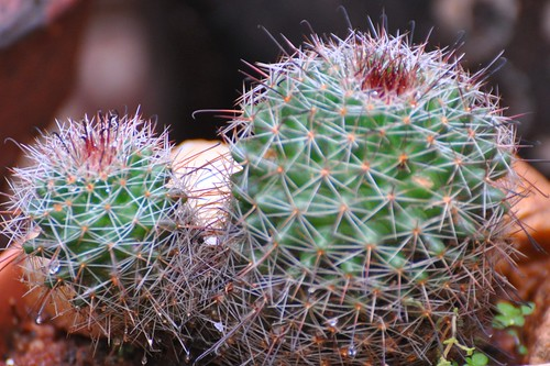 Cactus - Personal Collection | by Scientific Photography ( 6 .2 Million+ vi