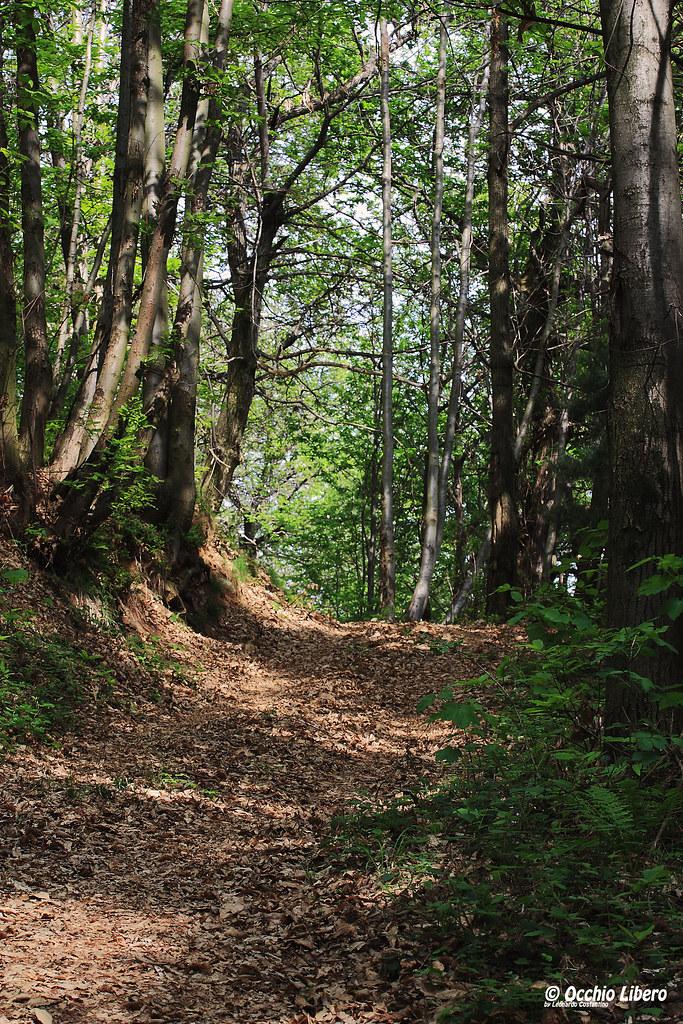 Sentiero nei boschi di castelnuovo nigra le foto di for Cabina innevata nei boschi