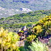 Haute Corse - Revellata derrière Calvi 120