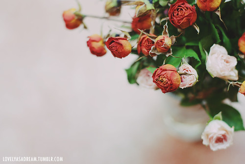 5. fragile flowers | by lovelyasadream