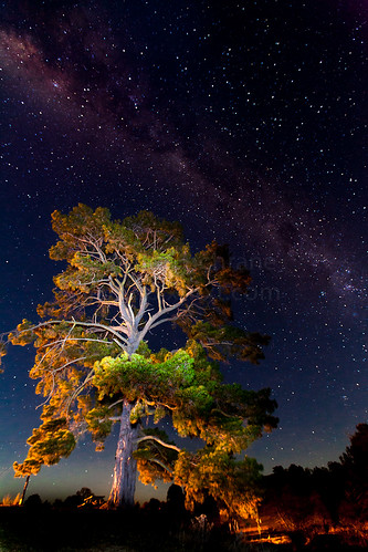 Milky Way over tree | by natecochrane