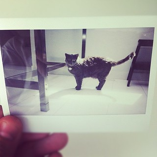 Sunlight #instax | by seventwentysk