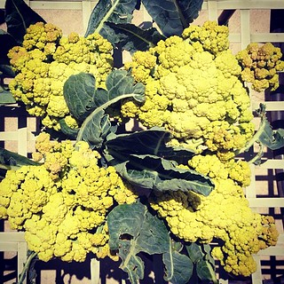 Romanesco heads harvested from the garden today. Although not as fractal-y as the ones at the market. | by A Walker in LA