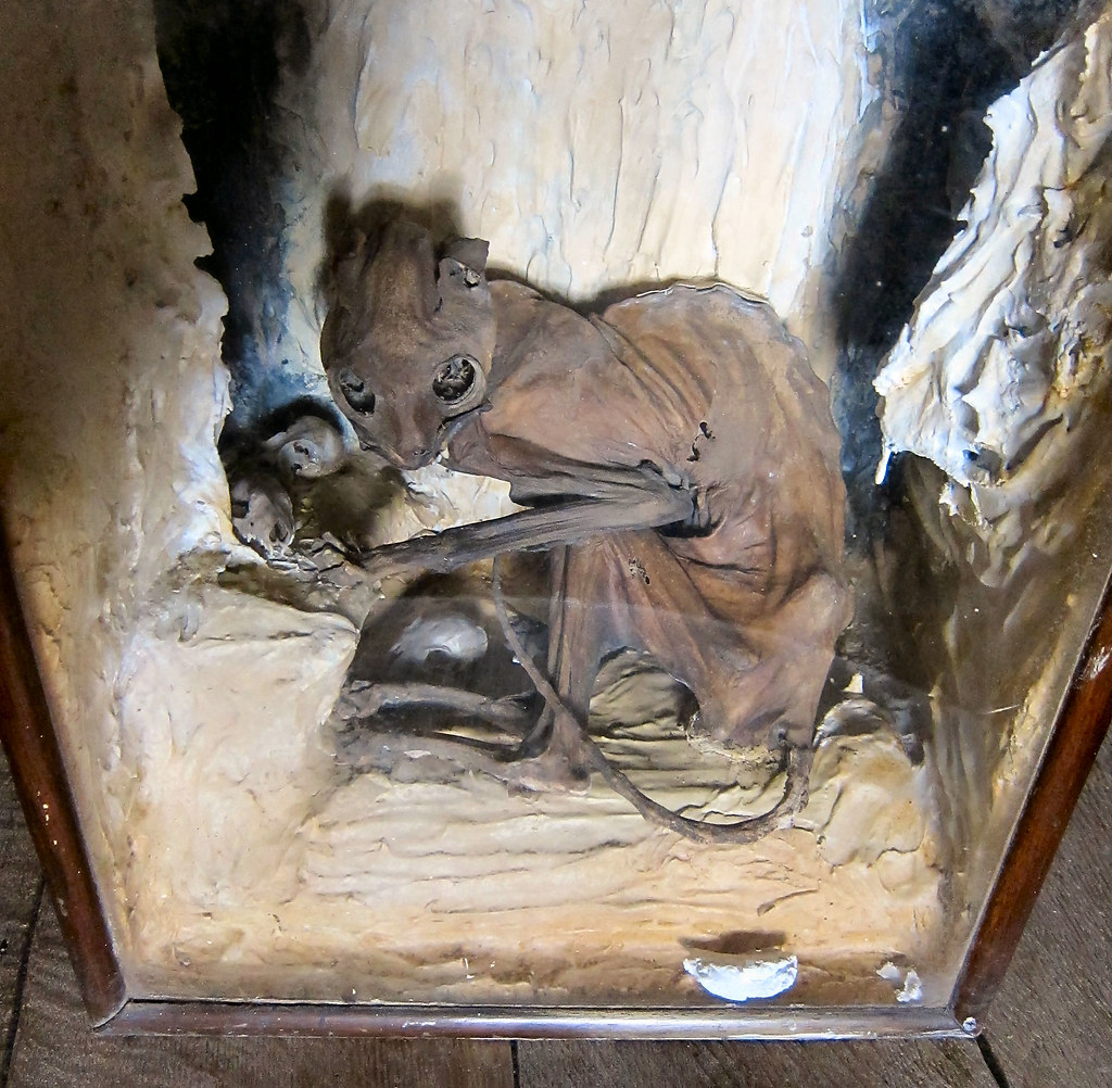 Mummified Cat At The Three Stags Heads Wardlow Mires