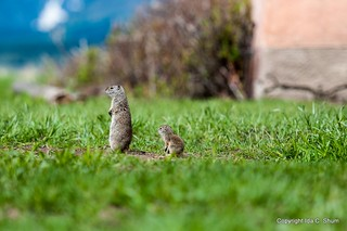 Squirrels! | by idashum