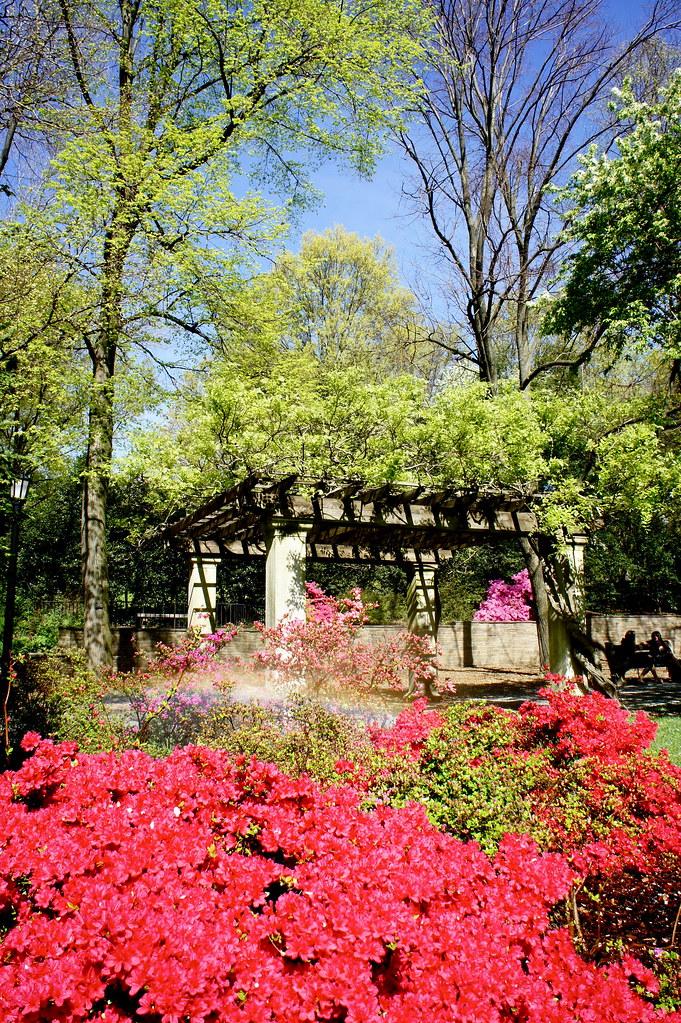 Brooklyn Botanical Gardens Flowers April Sony Dsc Marcia Daniel Quinn Flickr