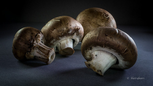 Mushrooms | by blair4bears