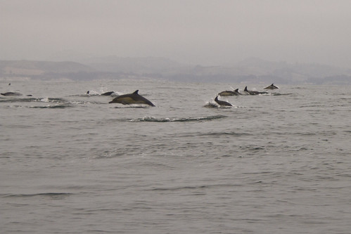 Dolphins | by The Spohrs Are Multiplying...