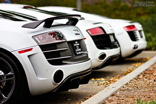 Evolution in a Frame [Explored] | by David Coyne Photography