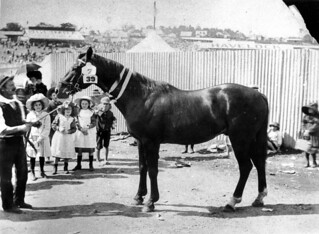 Children admiring a prize winning horse at the Ekka, Brisbane, ca. 1906 | by State Library of Queensland, Australia