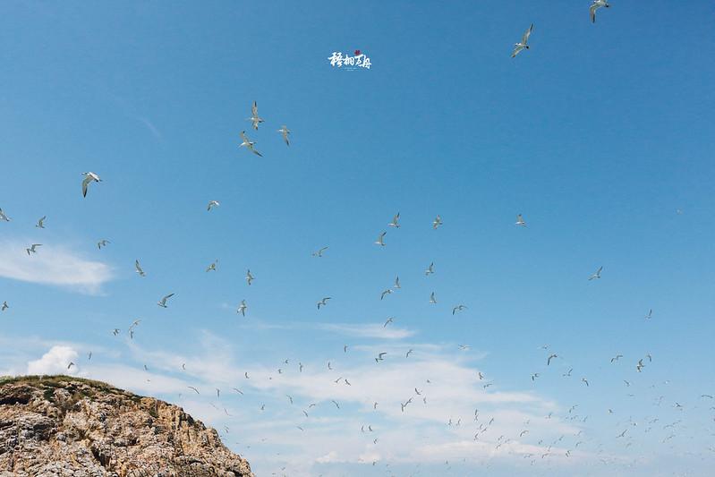 2|展翅高飛的夢想追逐,又是什麼樣的?