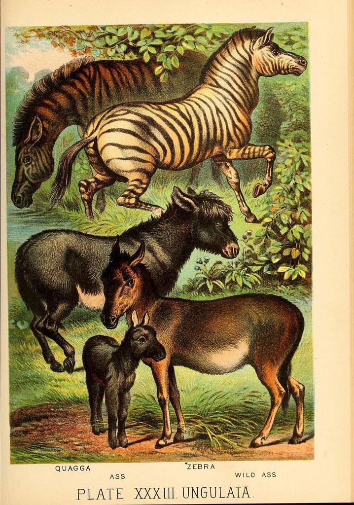 Book Of Nature Episode  Science Vs Scientism Stitcher