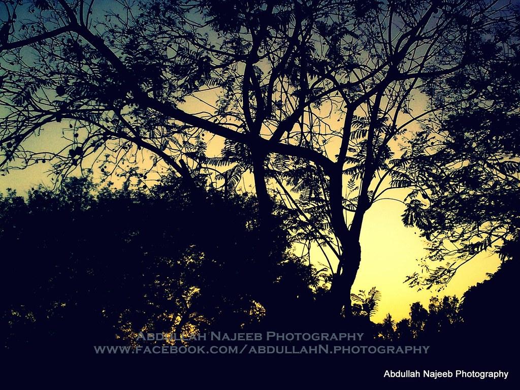 silent nature 1280 - photo #5