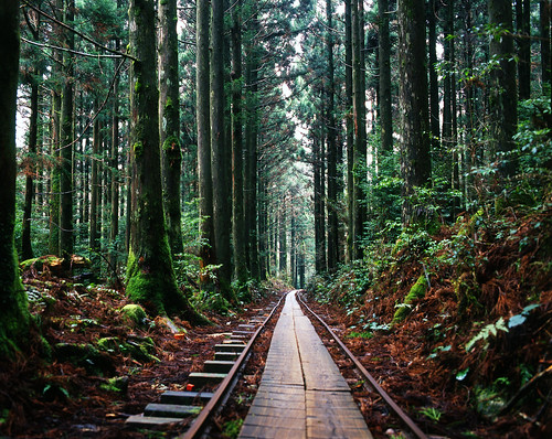Train tracks in the forest | by popoandrew