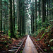 Train tracks in the forest