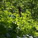 Ravine vegetation