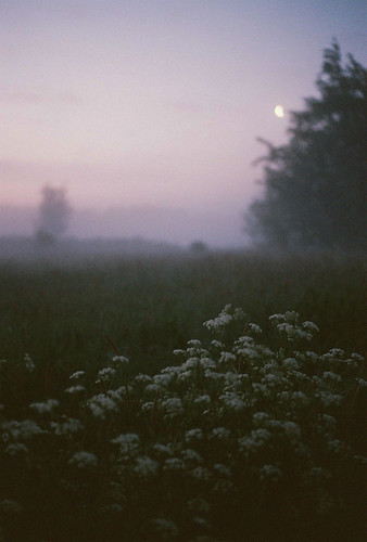 Songs of a misty moon | by Picea abies